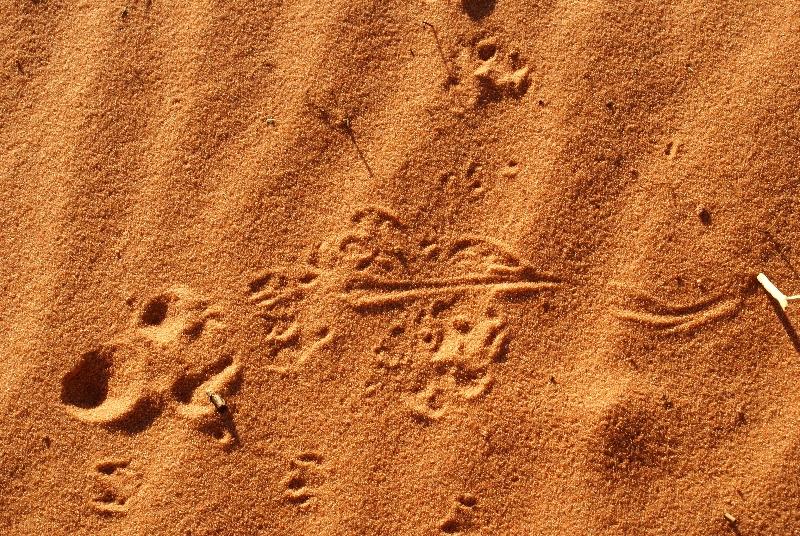 Hagedissporen in het zand