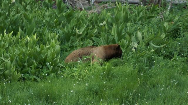 Zag twee beren... - Yosemite, California