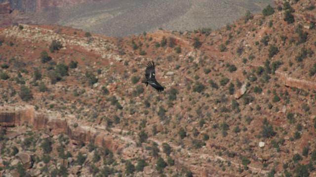 Wildlife - Grand Canyon Village, Arizona