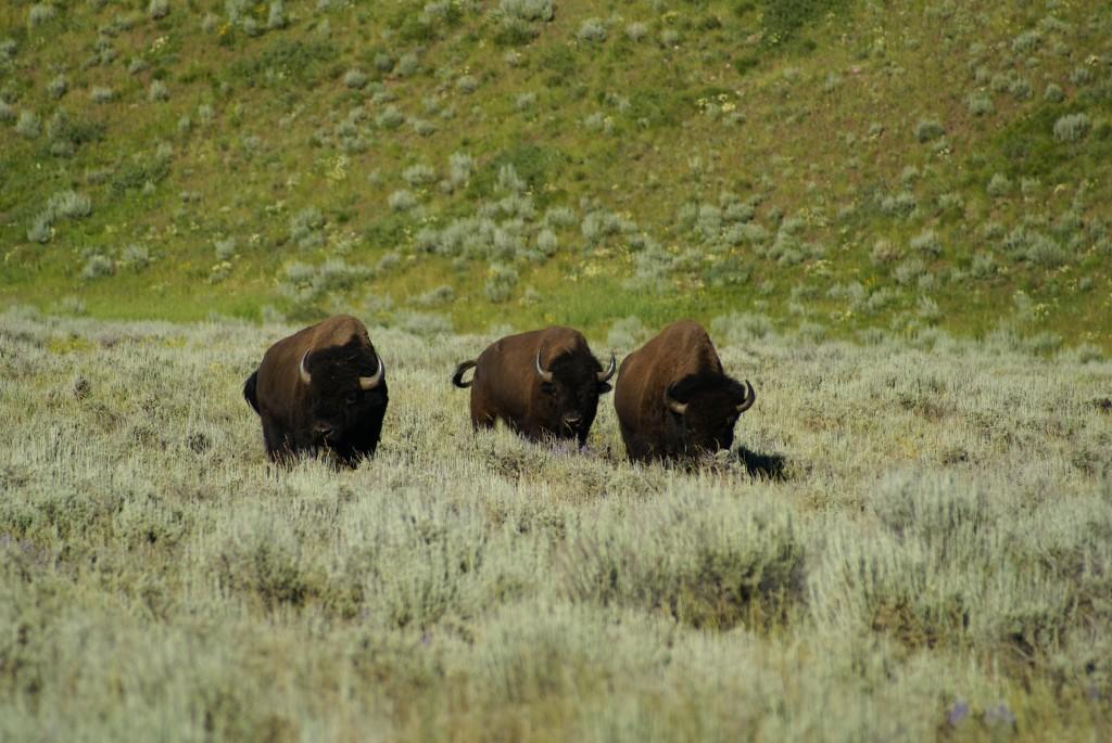 Tas gezocht - Jackson Hole, Wyoming